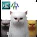 Pet Cat 1