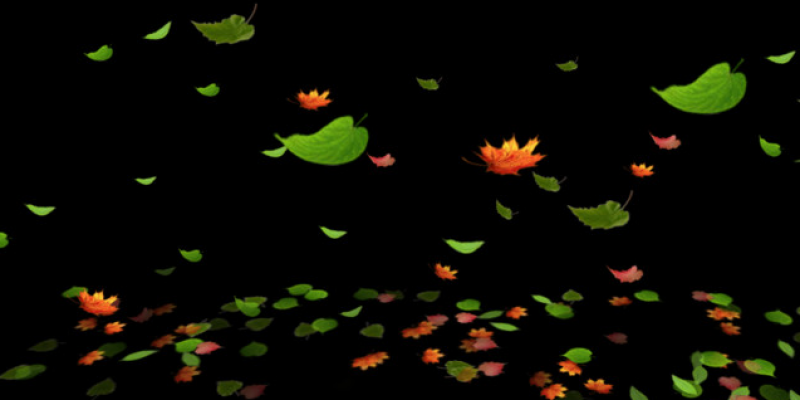 Leaves Particle Set