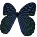 Butterfly with Animations